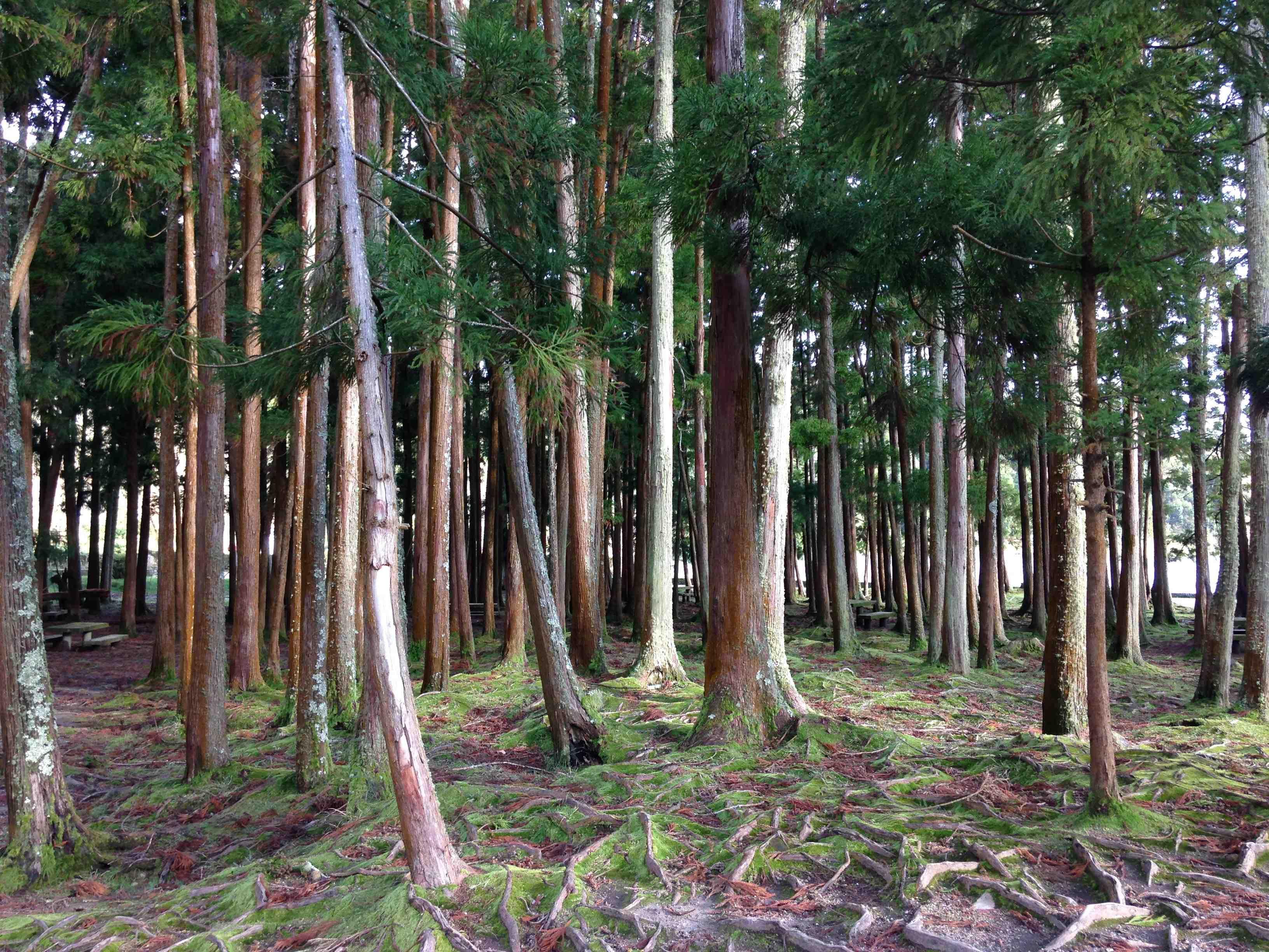 furnas árvores